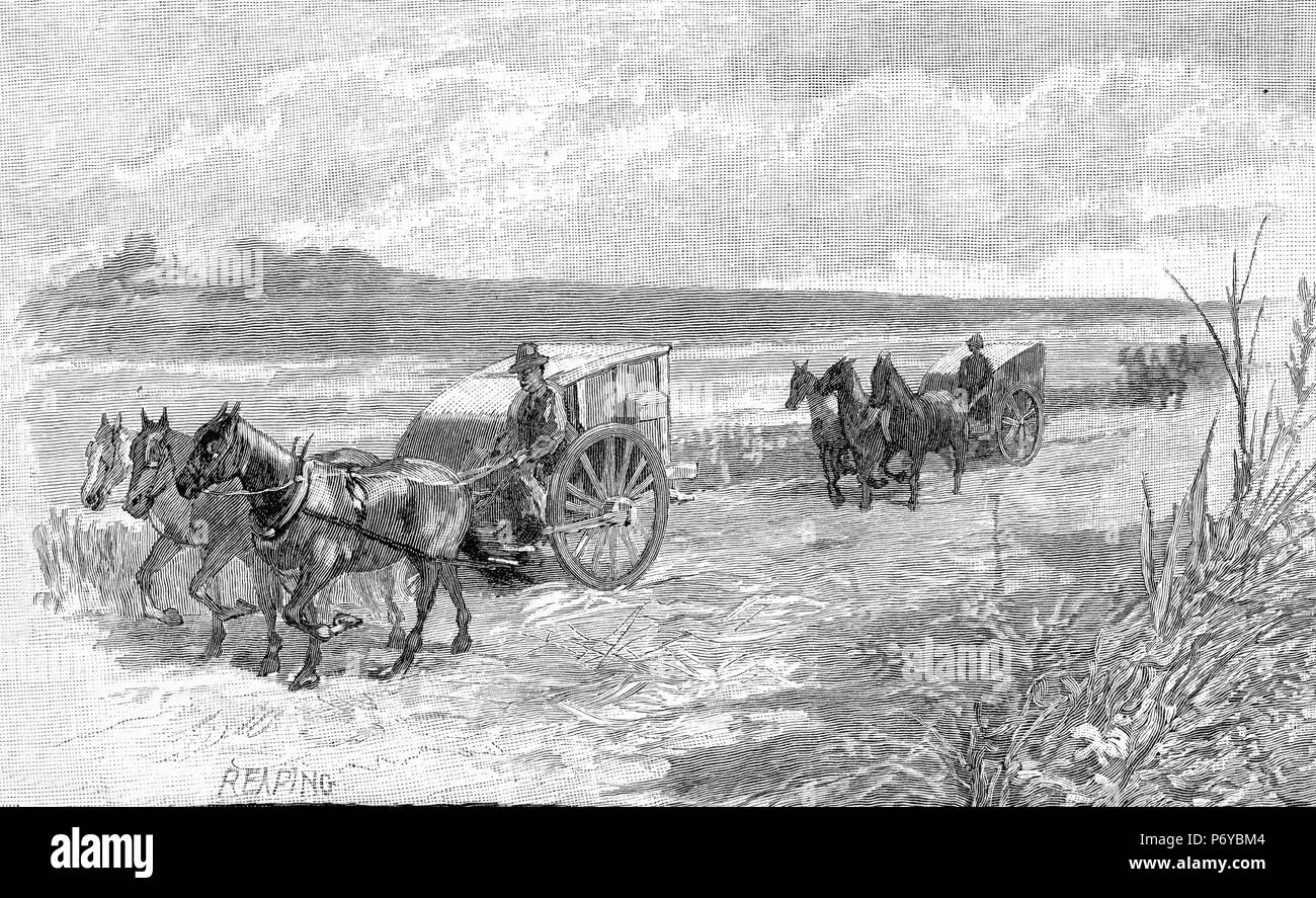Engraving of a farmers reaping their grain in Australia, circa 1880. From the Picturesque Atlas of Australasia Vol 2, 1886 - Stock Image