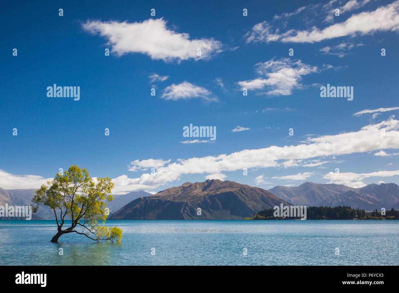 New Zealand, South Island, Otago, Wanaka, Lake Wanaka, solitary tree Stock Photo