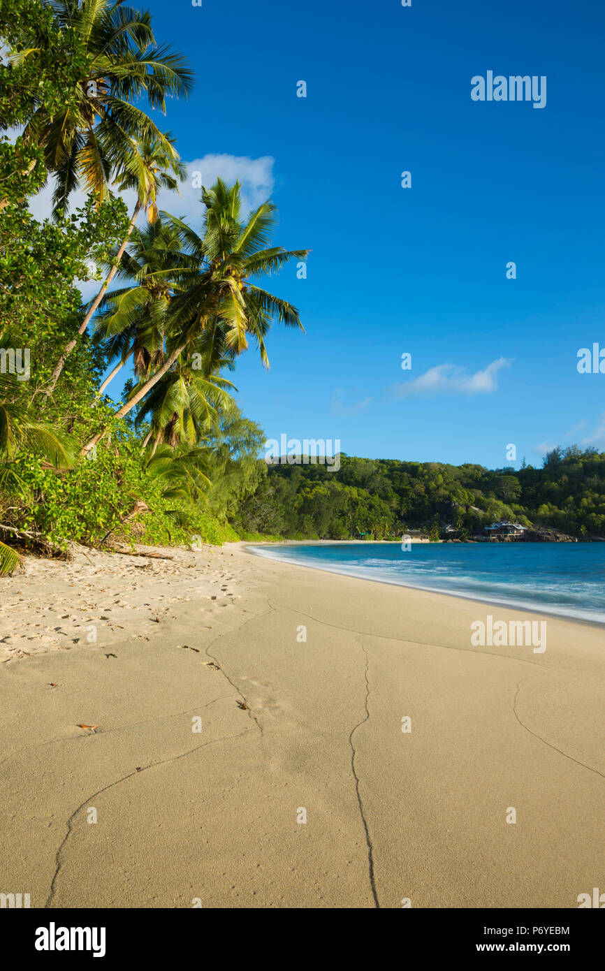 Palm trees and tropical beach, southern Mahe, Seychelles - Stock Image
