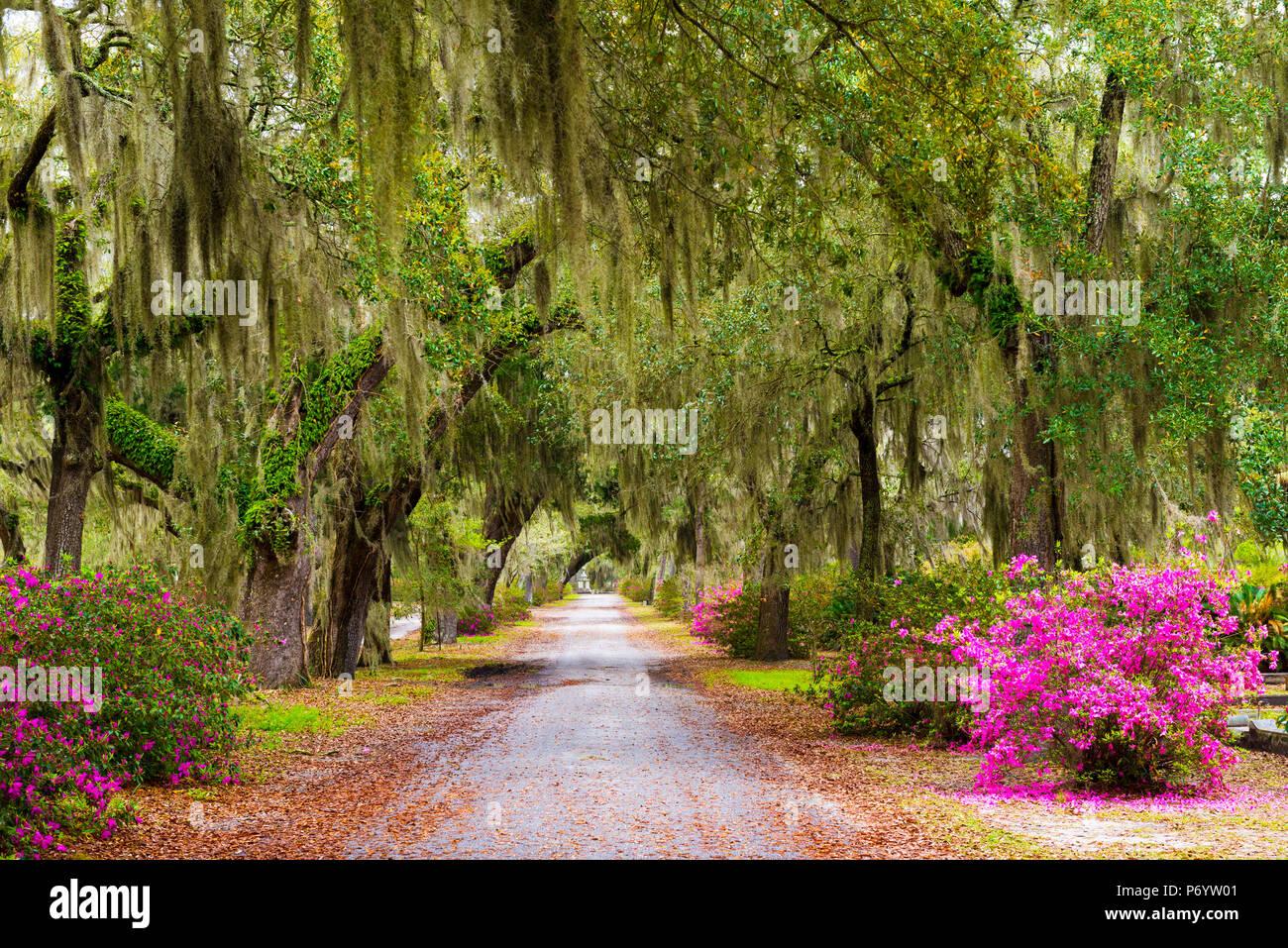 USA, Georgia, Savanah, Tree lined bath way in the Bonaventure Cemetery Stock Photo