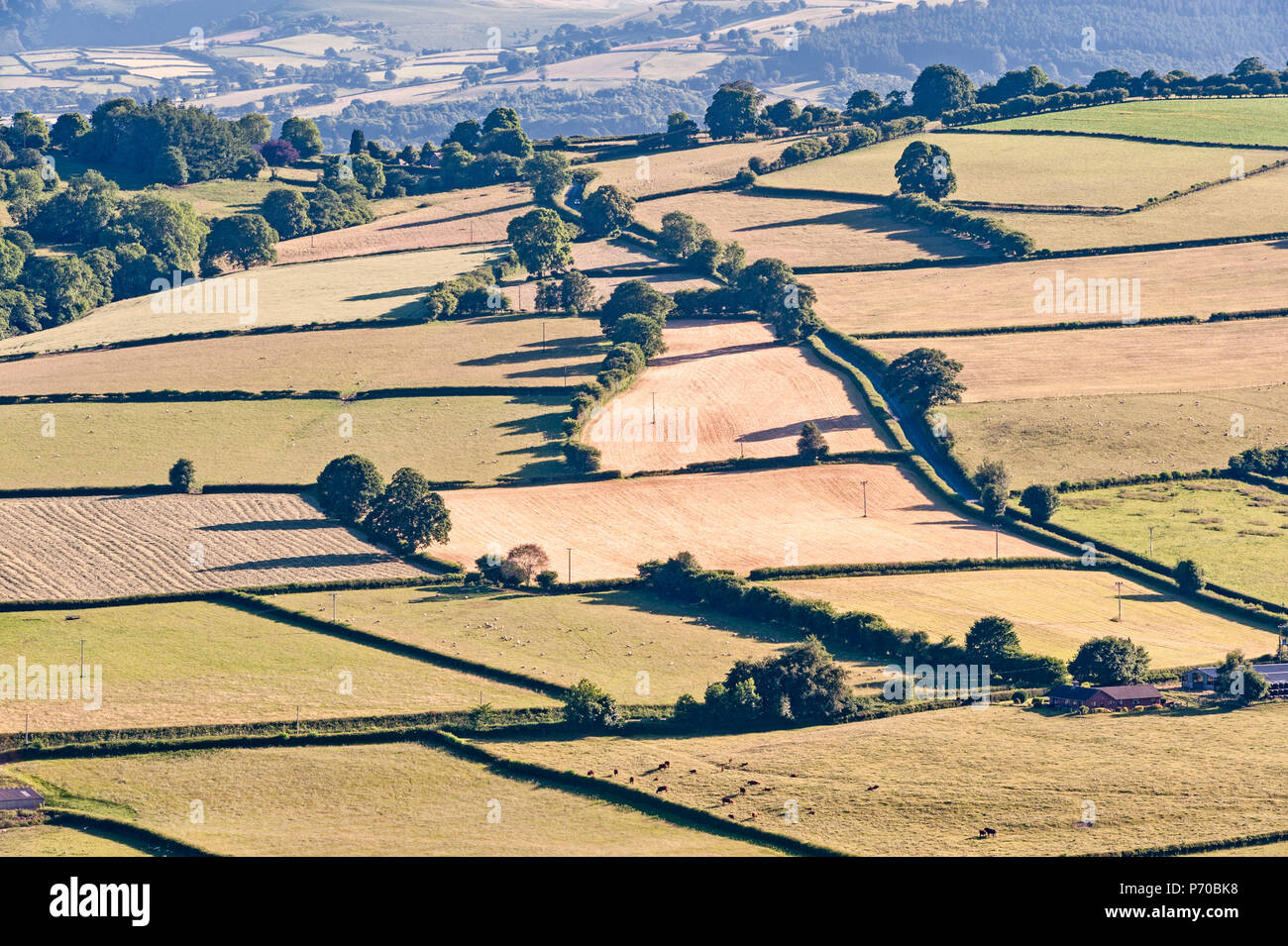 Near Knighton, Powys, Wales, UK. Bleached and dry fields on the Welsh borders during the summer heatwave of 2018 - Stock Image
