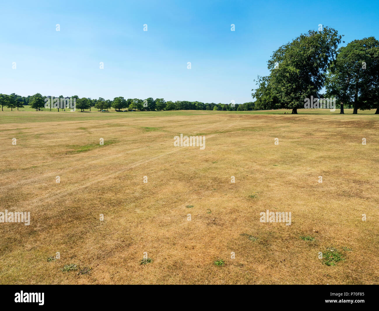 Parched grass in hot weather at Roundhay Park Roundhay Leeds West Yorkshire England Stock Photo