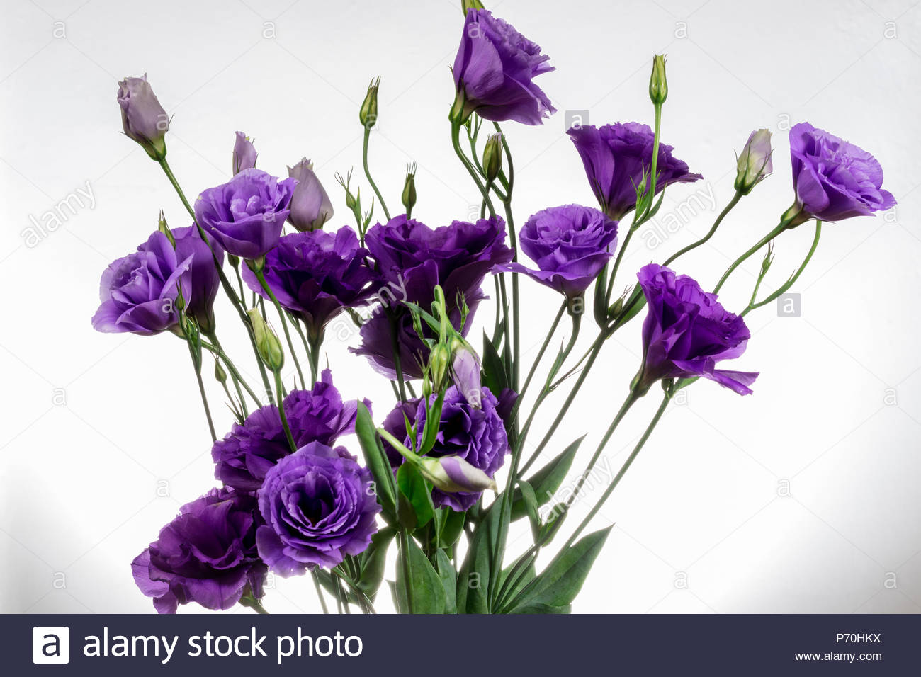 A bouquet of Lisianthus Purple flowers Stock Photo