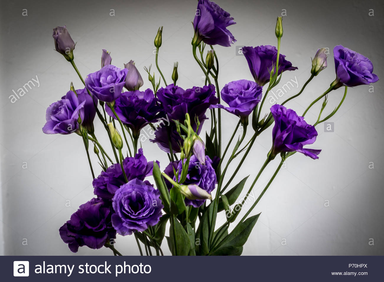 A bouquet of Lisianthus Purple flowers - Stock Image