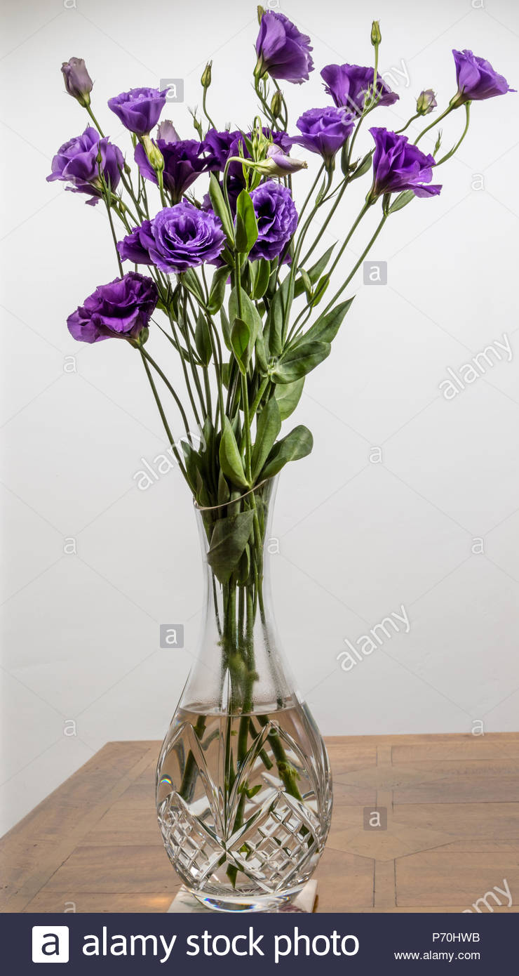 A bouquet of Lisianthus Purple flowers in a cut-glass crystal vase - Stock Image
