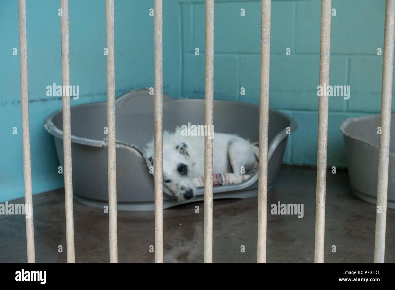 Dogs Trust adoption Kennels in Shrewsbury, Shropshire, UK, July 2018 - Stock Image