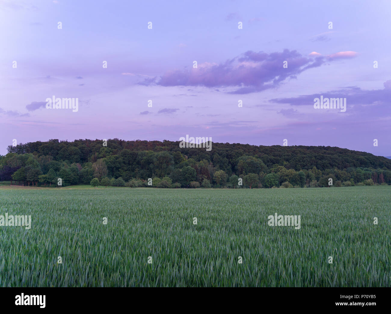 Germany, Colorful forest behind green fields at dawning - Stock Image