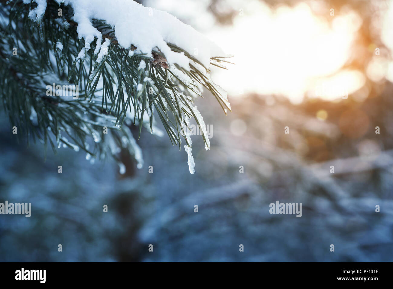 Winter background, close up of frosted branch on a snowy day with copy space - Stock Image