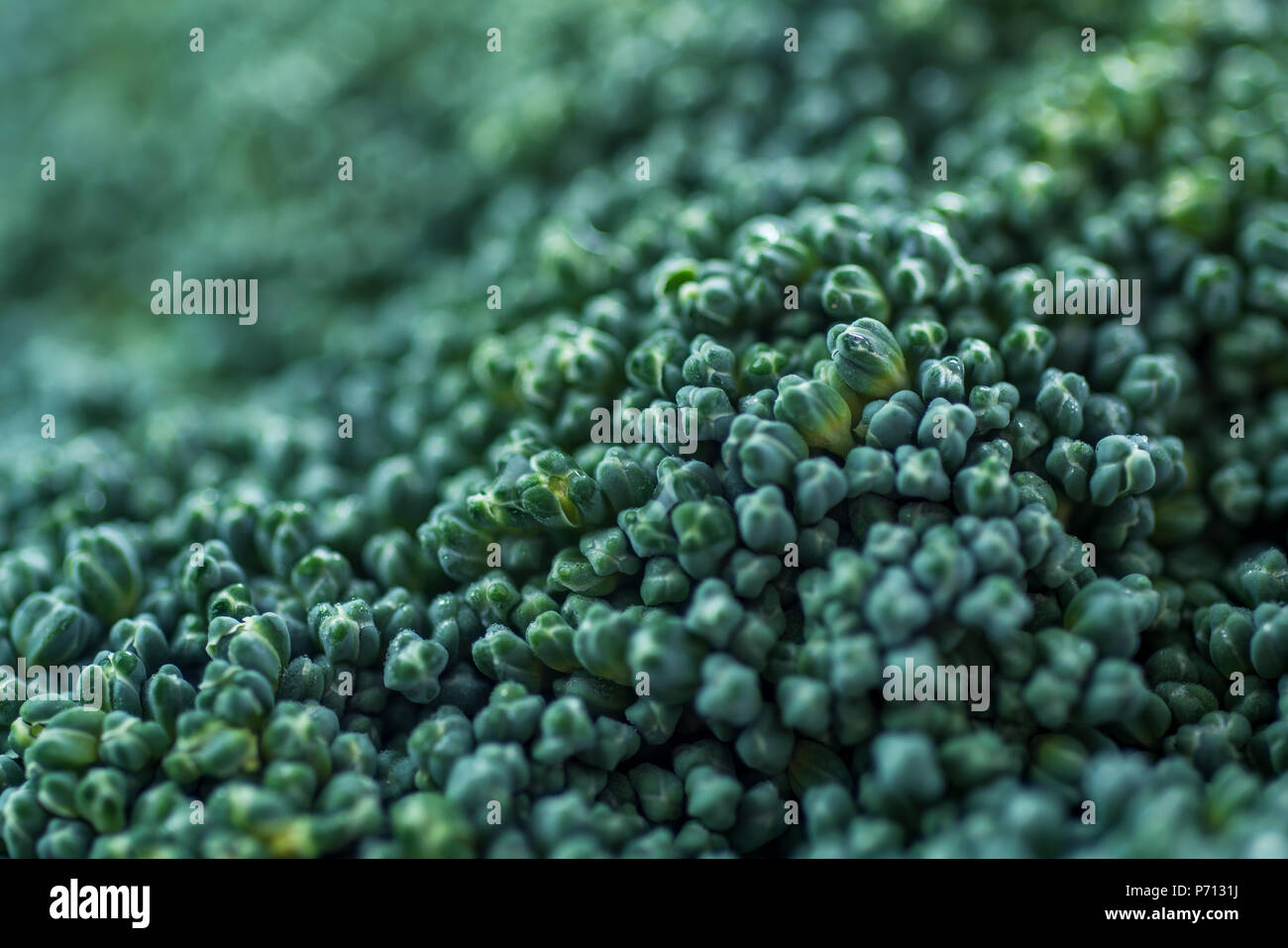 closeup of a stem of raw broccoli, made with a macro lens - Stock Image