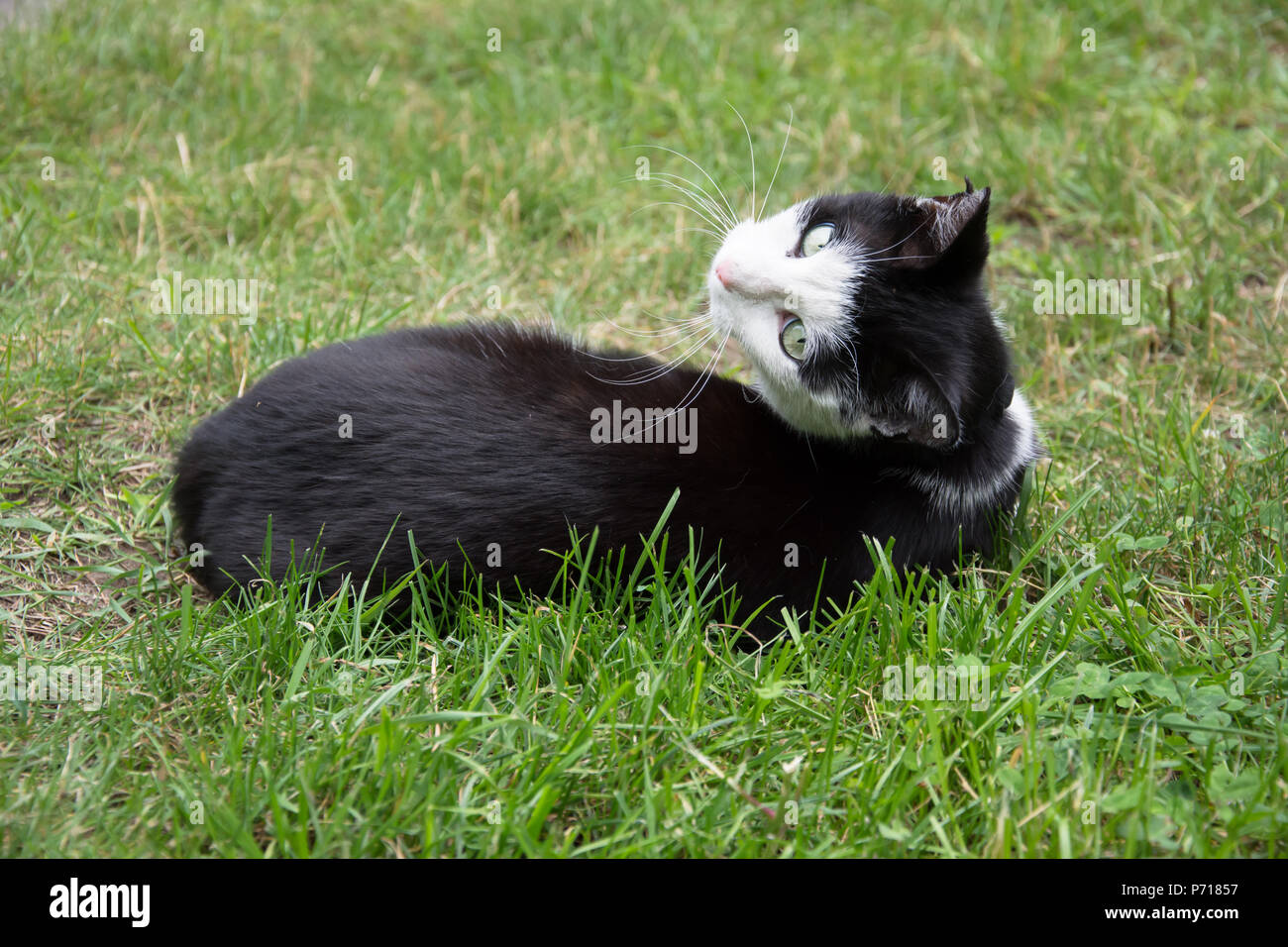 A Cute Black Cat With Green Eyes Is Lying On Stock Photos A Cute