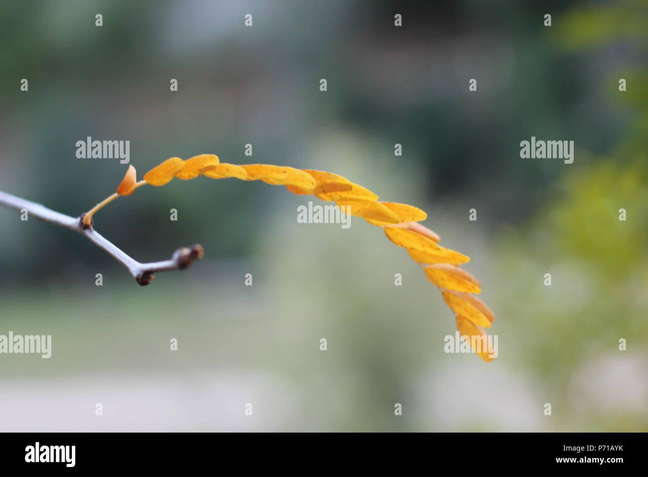 Plant in focus - Stock Image