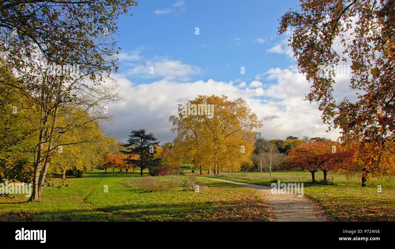 Autumn trees in a meadow  in `Bois de Boulogne` city park on a sunny day with blue sky  in Paris, France - Stock Image