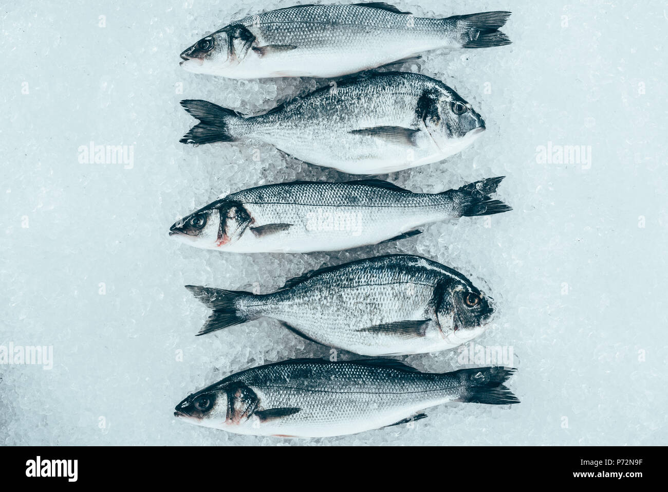 top view of fresh gourmet uncooked seafood on ice - Stock Image