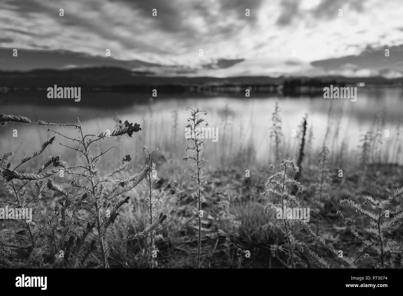 Autumn in lake pukaki south island new zealand landscape stock image