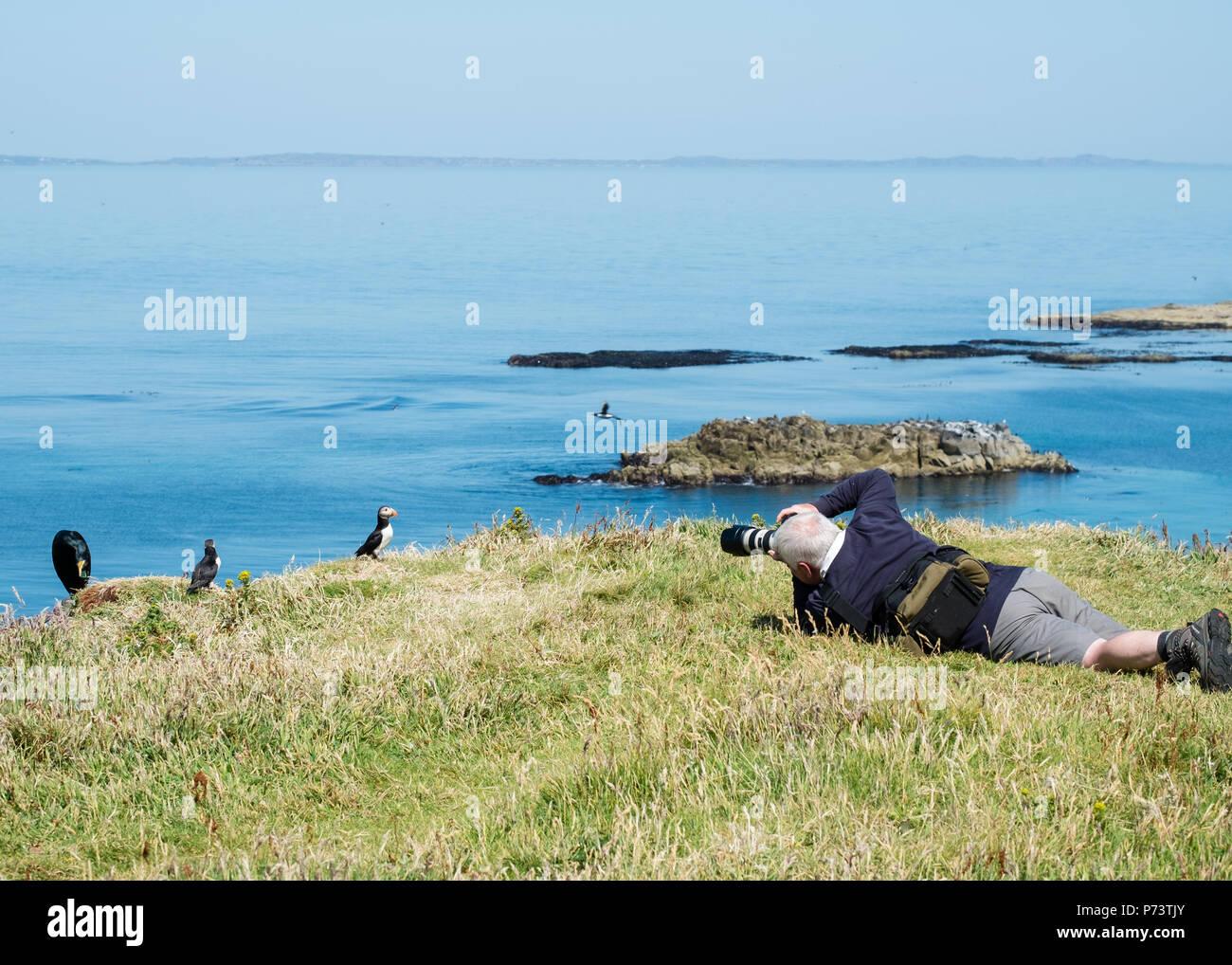 Photographer taking photo of puffins on Lunga, Treshnish Isles, Scotland Stock Photo