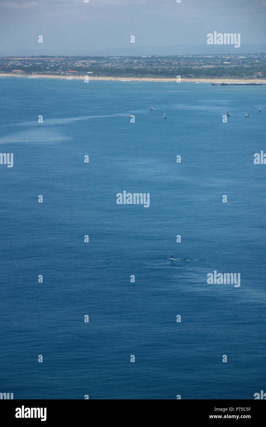 Humpback whale near the coast of Ghana, seen from the airplane - Stock Image