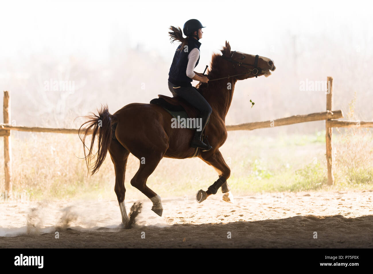 Young pretty girl - riding a horse in winter morning Stock Photo