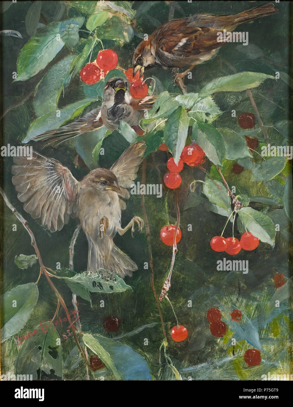 En av fem djurstudier i samma ram, NM 2223-2227. NM 2226 52 Sparrows in a  Cherry Tree. Five studies in one frame, NM 2223-2227 (Bruno Liljefors) ...