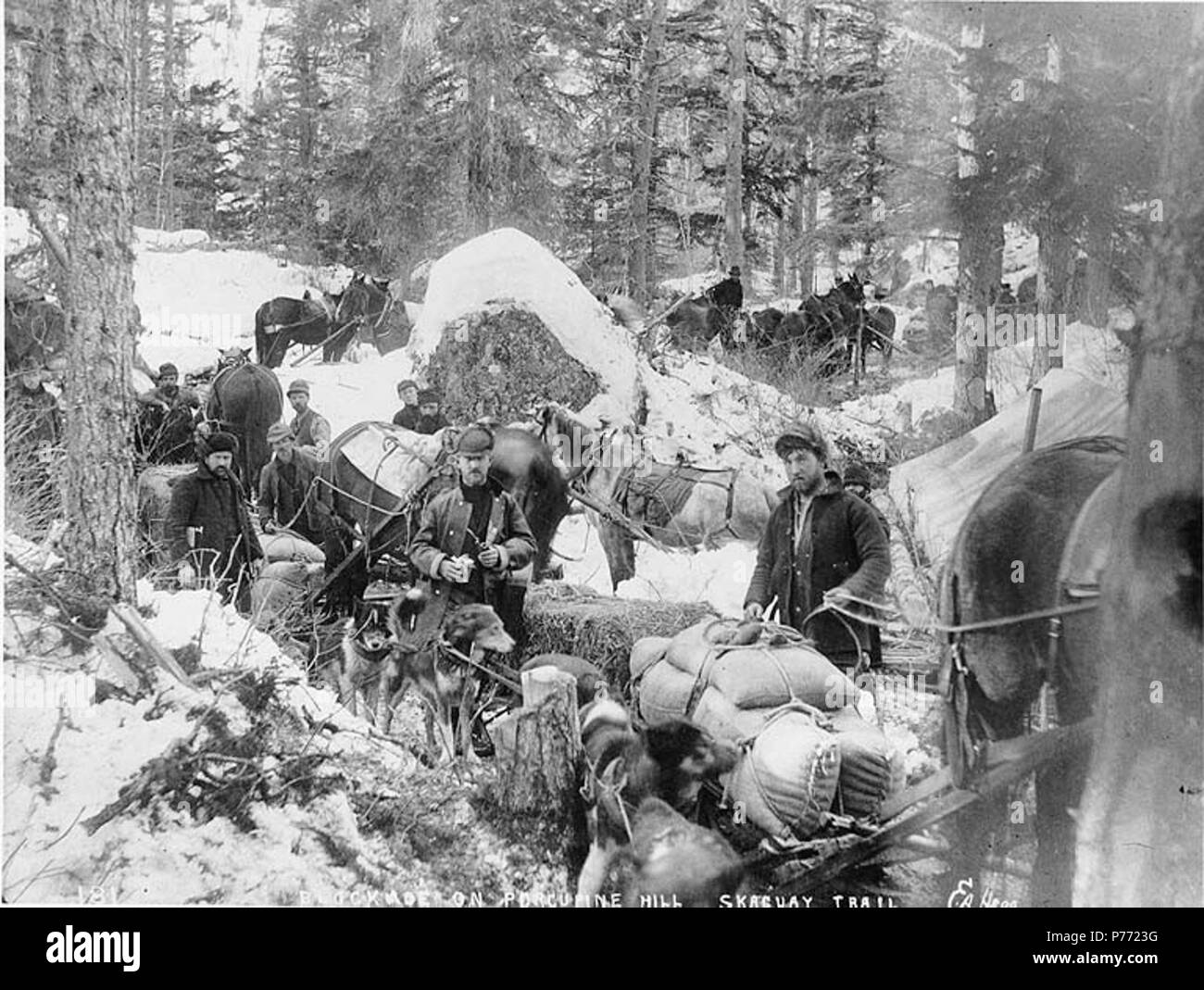 . English: Blockade of Klondikers on Porcupine Hill, White Pass Trail, Alaska, ca. 1898. English: Shows horse drawn sleds, pack dogs hauling freight and supplies on trail in forested area . Caption on image: 'Blockade on Porcupine Hill Skaguay Trail' Original image in Hegg Album 8, page 49 . Klondike Gold Rush. Subjects (LCTGM): Pack animals--Alaska; Horses--Alaska; Dogs--Alaska Subjects (LCSH): White Pass Trail; Trails--Alaska  . circa 1898 2 Blockade of Klondikers on Porcupine Hill, White Pass Trail, Alaska, ca 1898 (HEGG 705) - Stock Image