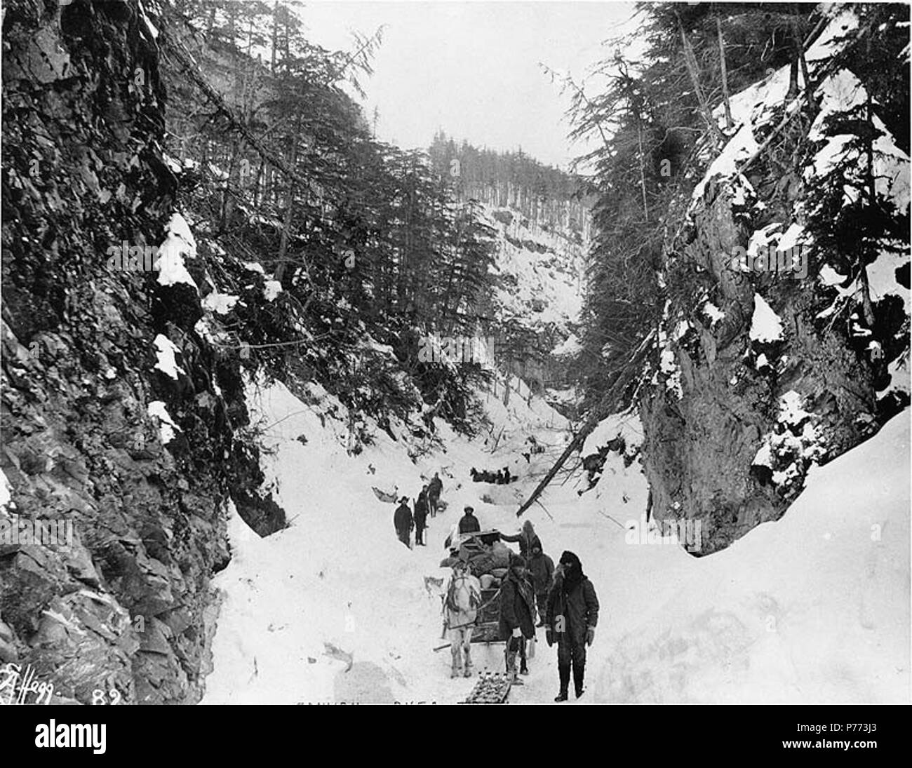 . English: Klondikers with horse drawn sled and supplies at Canyon, Chilkoot Trail, Alaska, 1897. English: Caption on image: 'Canyon Dyea Trail' Original image in Hegg Album 1, page 15 . Klondike Gold Rush. Subjects (LCTGM): Canyons--Alaska; Sled dogs--Alaska; Sleds--Alaska; Horses--Alaska Subjects (LCSH): Chilkoot Trail; Trails--Alaska  . 1897 7 Klondikers with horse drawn sled and supplies at Canyon, Chilkoot Trail, Alaska, 1897 (HEGG 609) - Stock Image