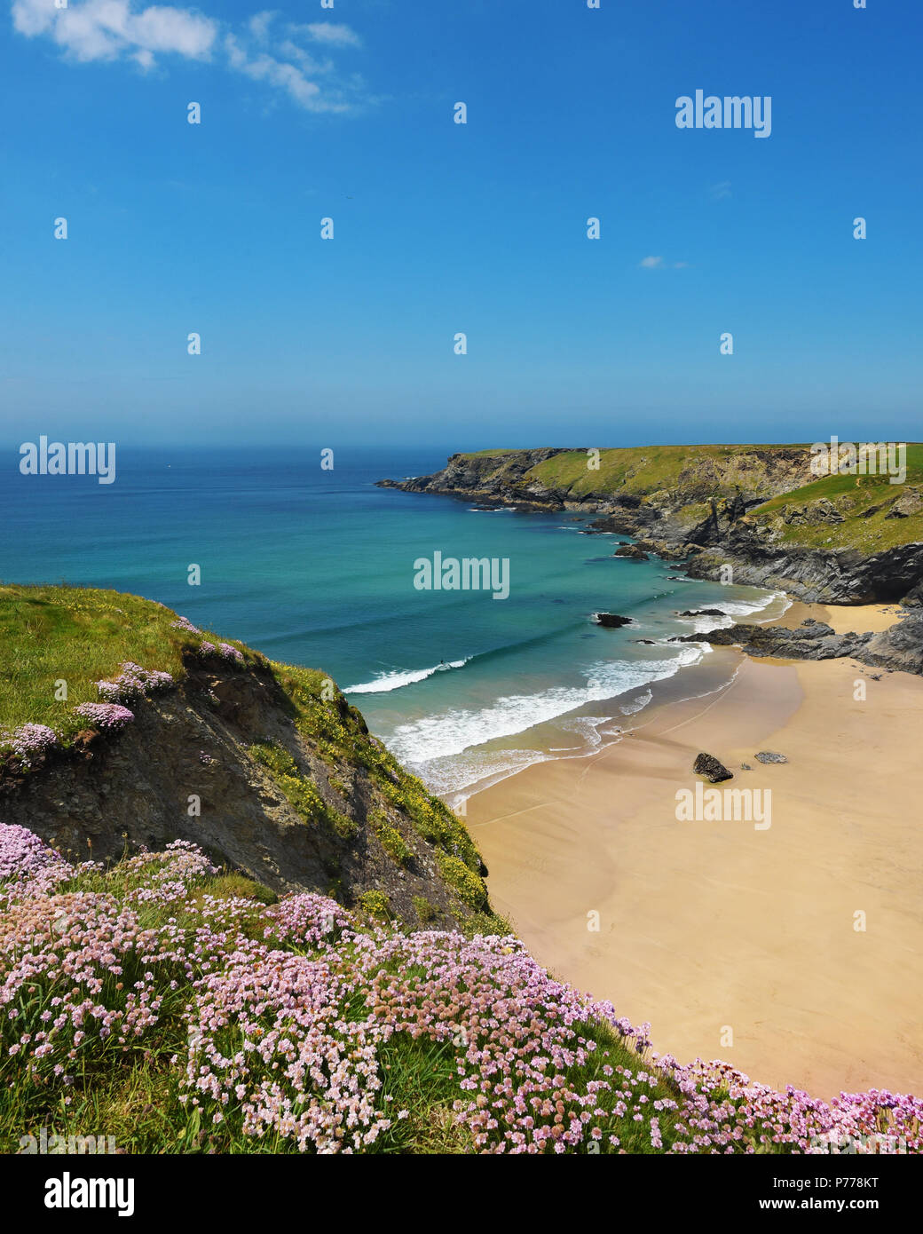 Carnewas at Bedruthan, national trust site, wildflowers in summer - Stock Image