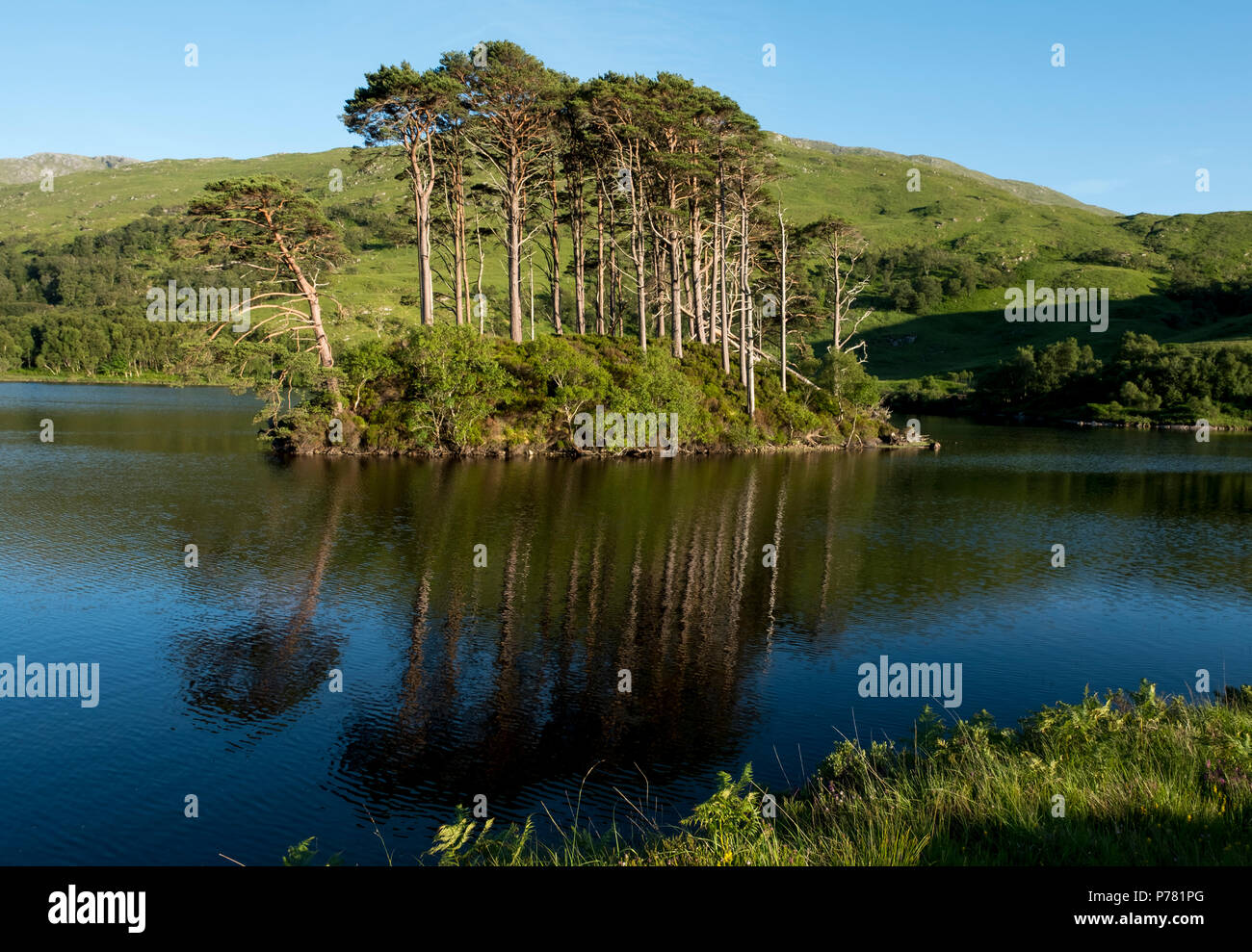 Eilean na Moine island, Loch Eilt, Lochaber, Scotland. This small island was used as a location in the Harry Potter the Chamber of Secrets. - Stock Image