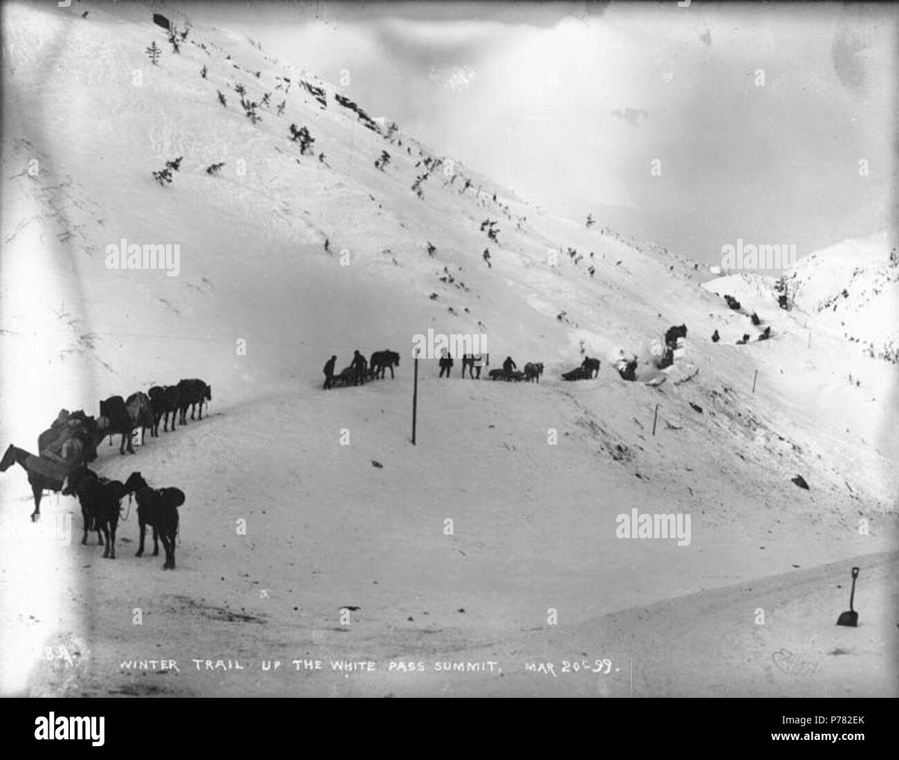 . English: Packtrains ascending the trail to White Pass summit, Alaska, March 20, 1899. English: Caption on image: 'Winter trail up the White Pass summit Mar 20th '99'' Original image in Hegg Album 9, page 41 . Klondike Gold Rush Subjects (LCTGM): Pack animals--Alaska--White Pass; Sleds & sleighs--Alaska--White Pass Subjects (LCSH): Mountain passes--Alaska; White Pass Trail; Trails--Alaska  . 1899 10 Packtrains ascending the trail to White Pass summit, Alaska, March 20, 1899 (HEGG 25) - Stock Image