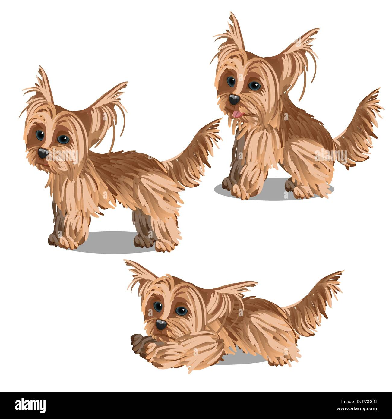 Set Of Cartoon Animated Yorkshire Terrier Puppy Isolated On White