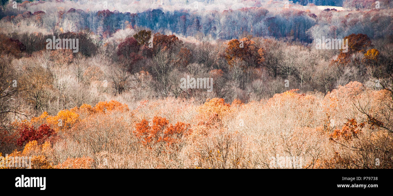 Late Autumn, Fall Leaves, Brown County, Indiana - Stock Image