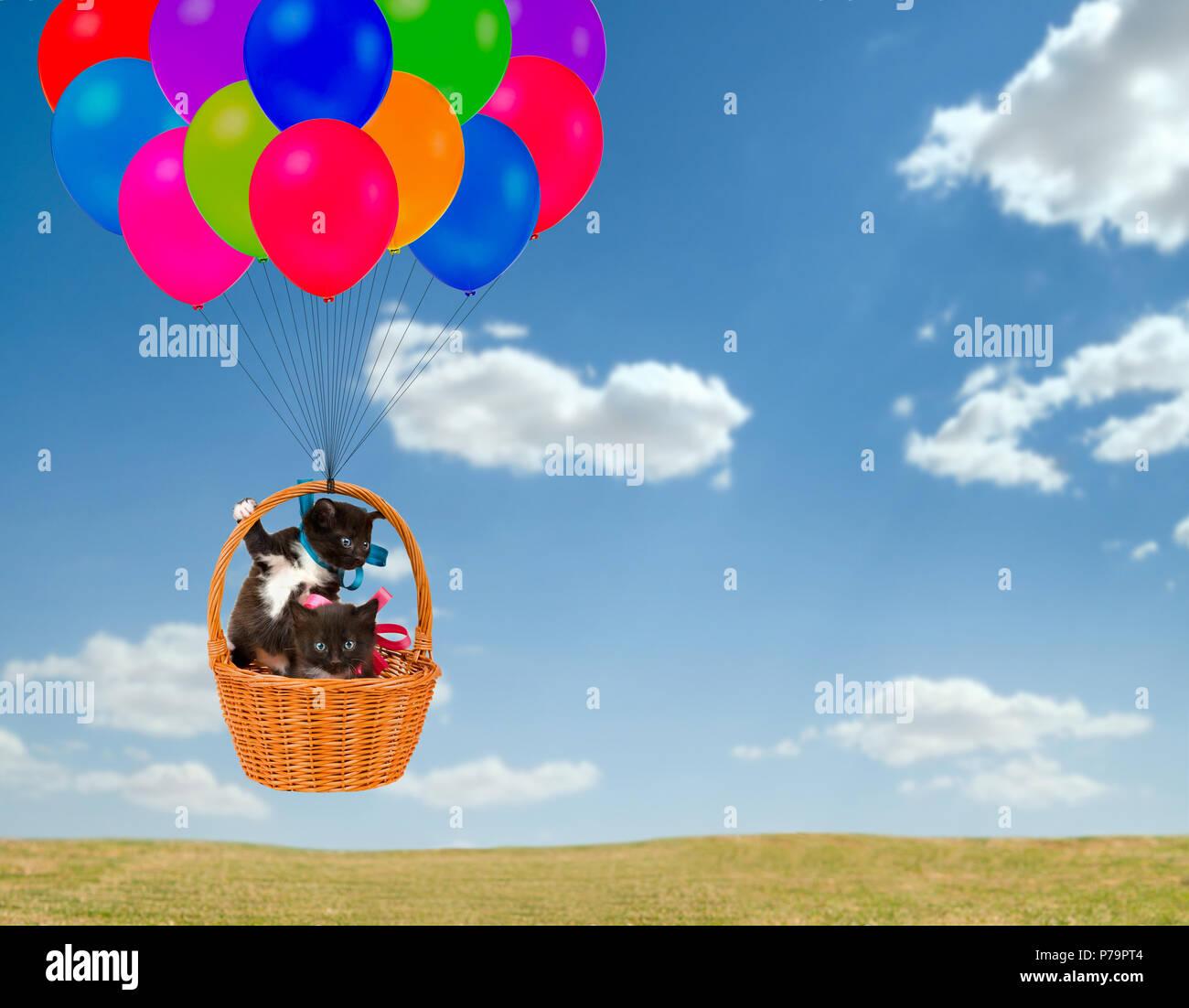 kittens fly in  basket on multicoloured balloon, outdoor - Stock Image