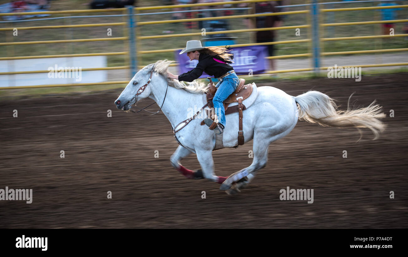 A Cowgirl Races A White Horse Towards The Finish Line During A Barrel Racing Competition At The Airdrie Pro Rodeo Stock Photo Alamy