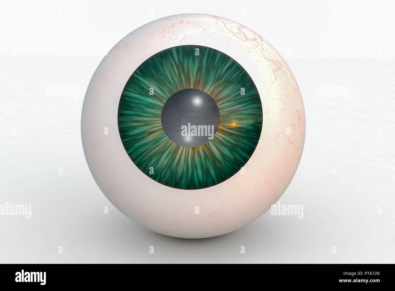one eyeball in front of isolated background (3d rendering) - Stock Image