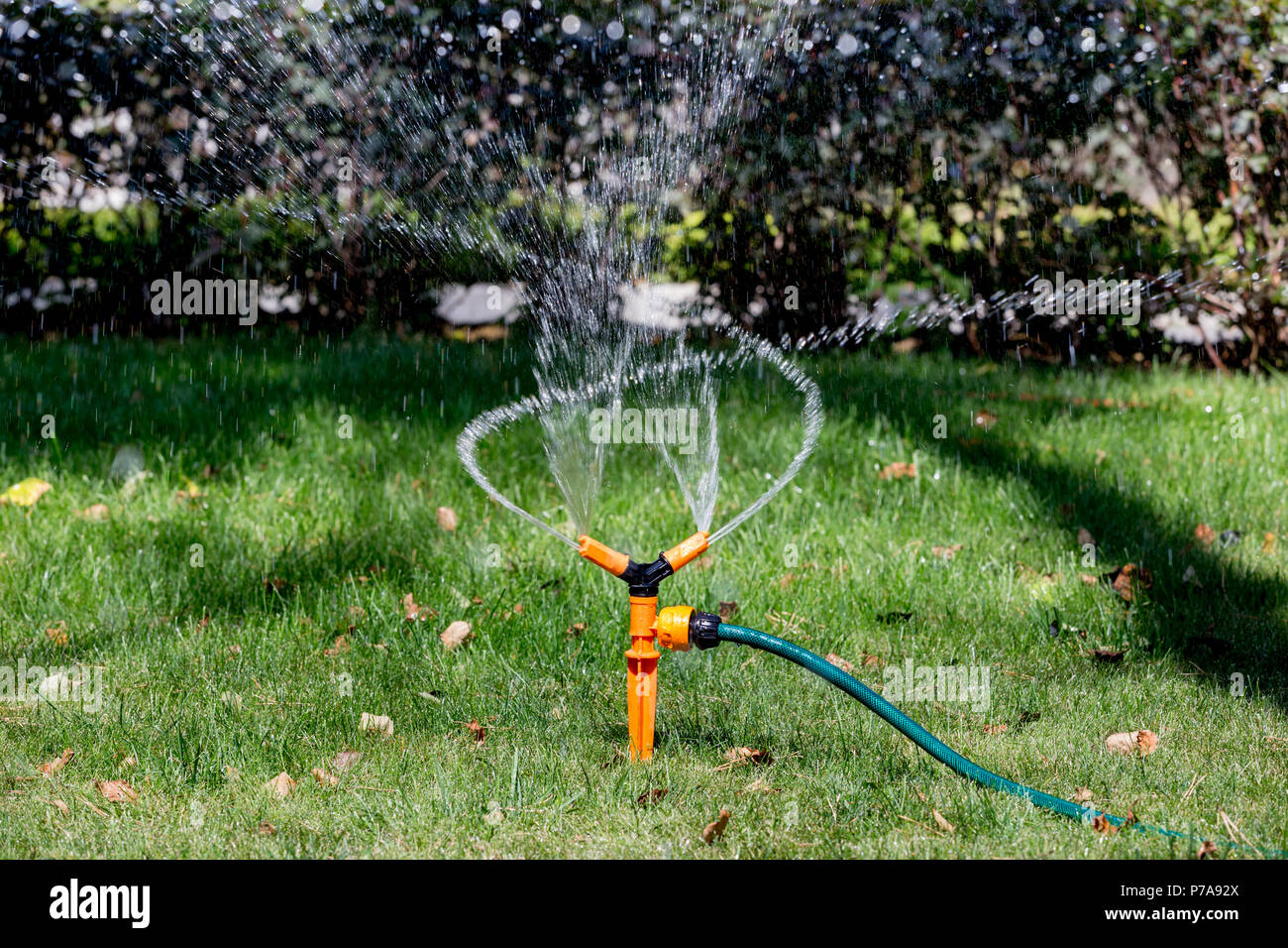 Watering the lawn with automatic sprinkler system Stock