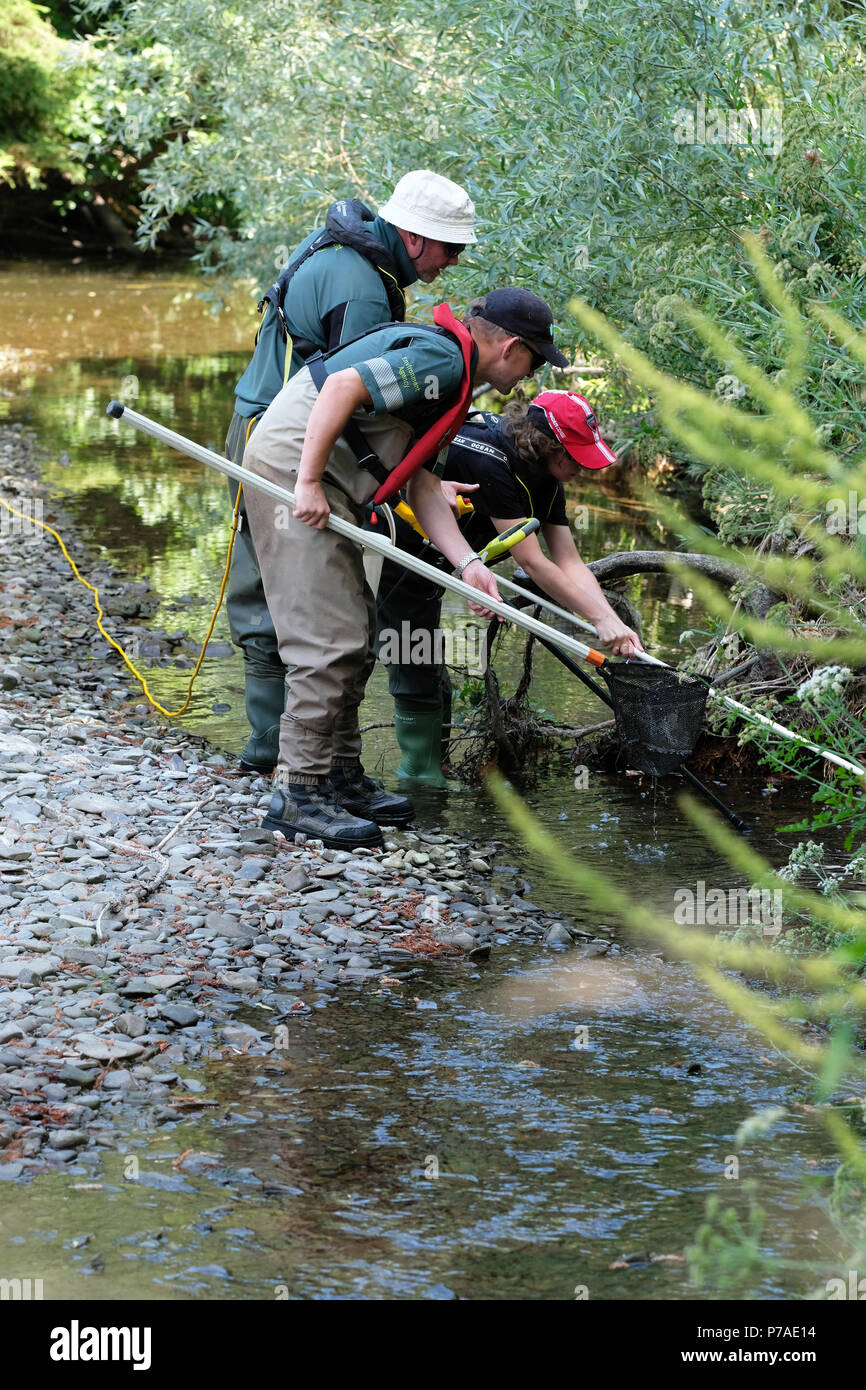 River Teme, near Bucknell, Herefordshire UK – Thursday 5th July 2018 - Environment Agency staff rescue trapped fish from small pools along the dried up river bed of the River Teme using electrofishing – the River Teme has dried up here after a prolonged dry spell of summer weather here and further upstream in Mid Wales. The recovered fish will be released back into the Teme further downstream. -  Steven May / Alamy Live News - Stock Image