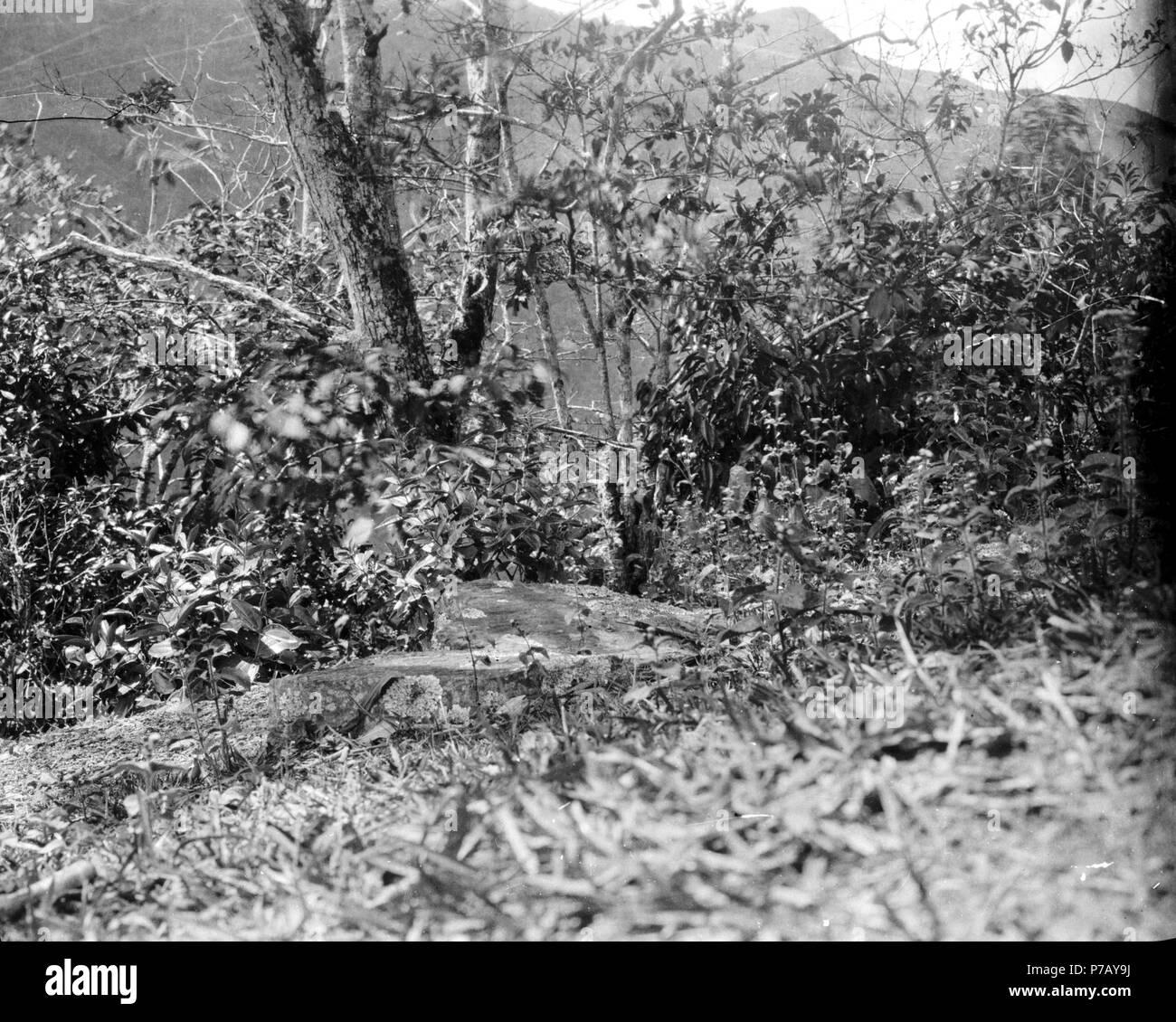 125 Från gammal boplats vid Rio Tuiche. Sydamerika, Rio Tuiche. Bolivia - SMVK - 002436 - Stock Image