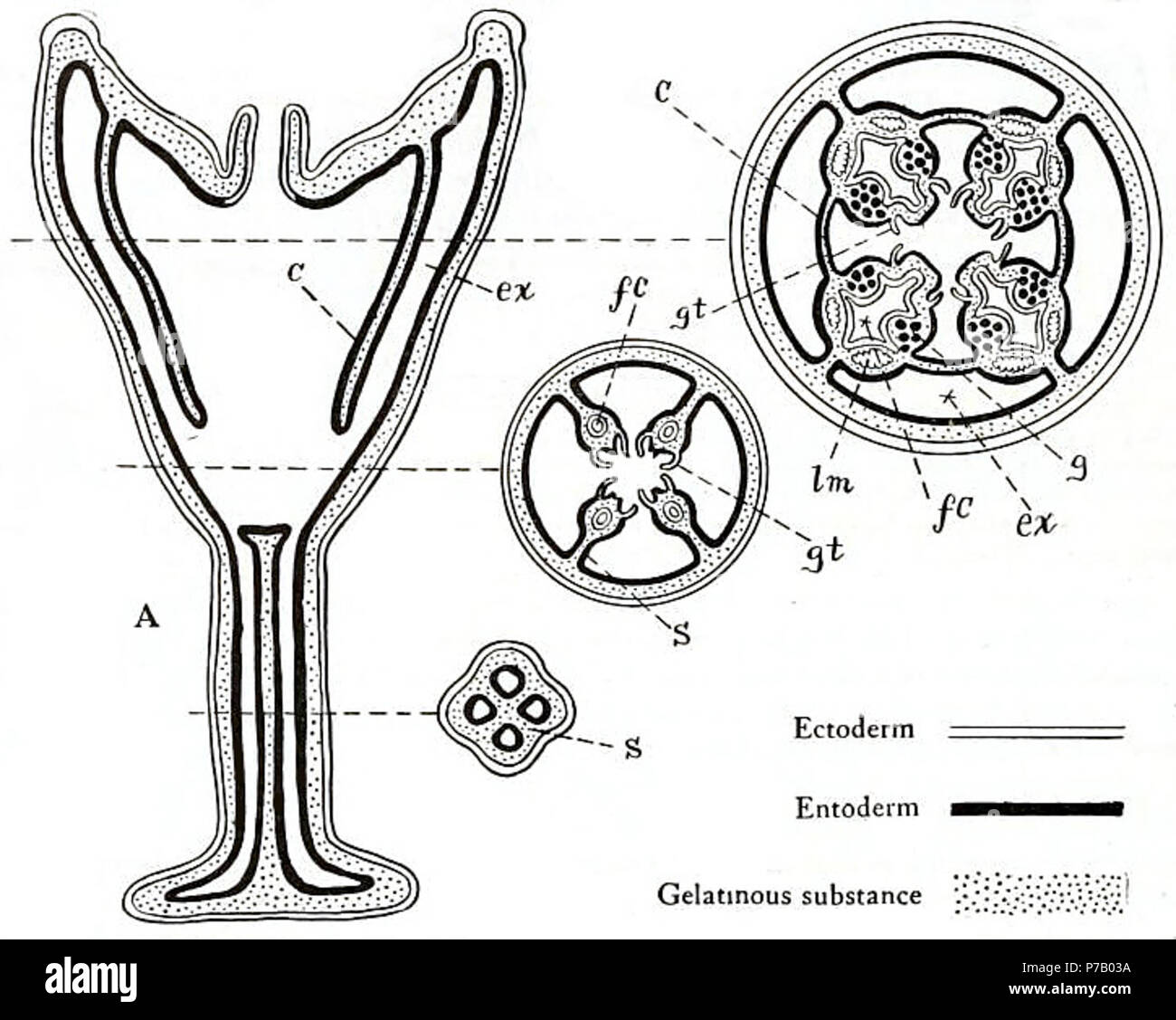 Gastric Pits Stock Photos Gastric Pits Stock Images Alamy