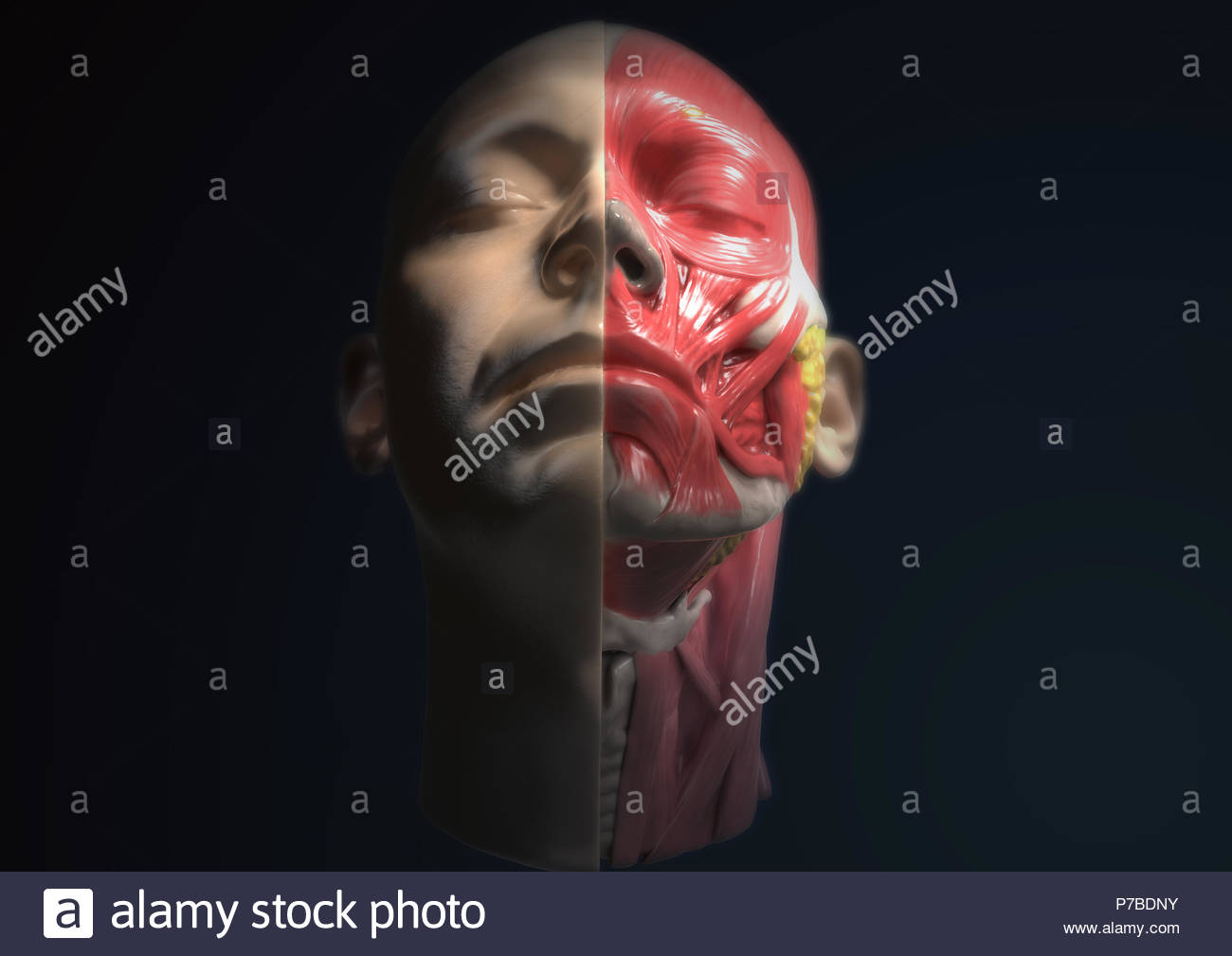 Optional And Muscles Stock Photos Optional And Muscles Stock
