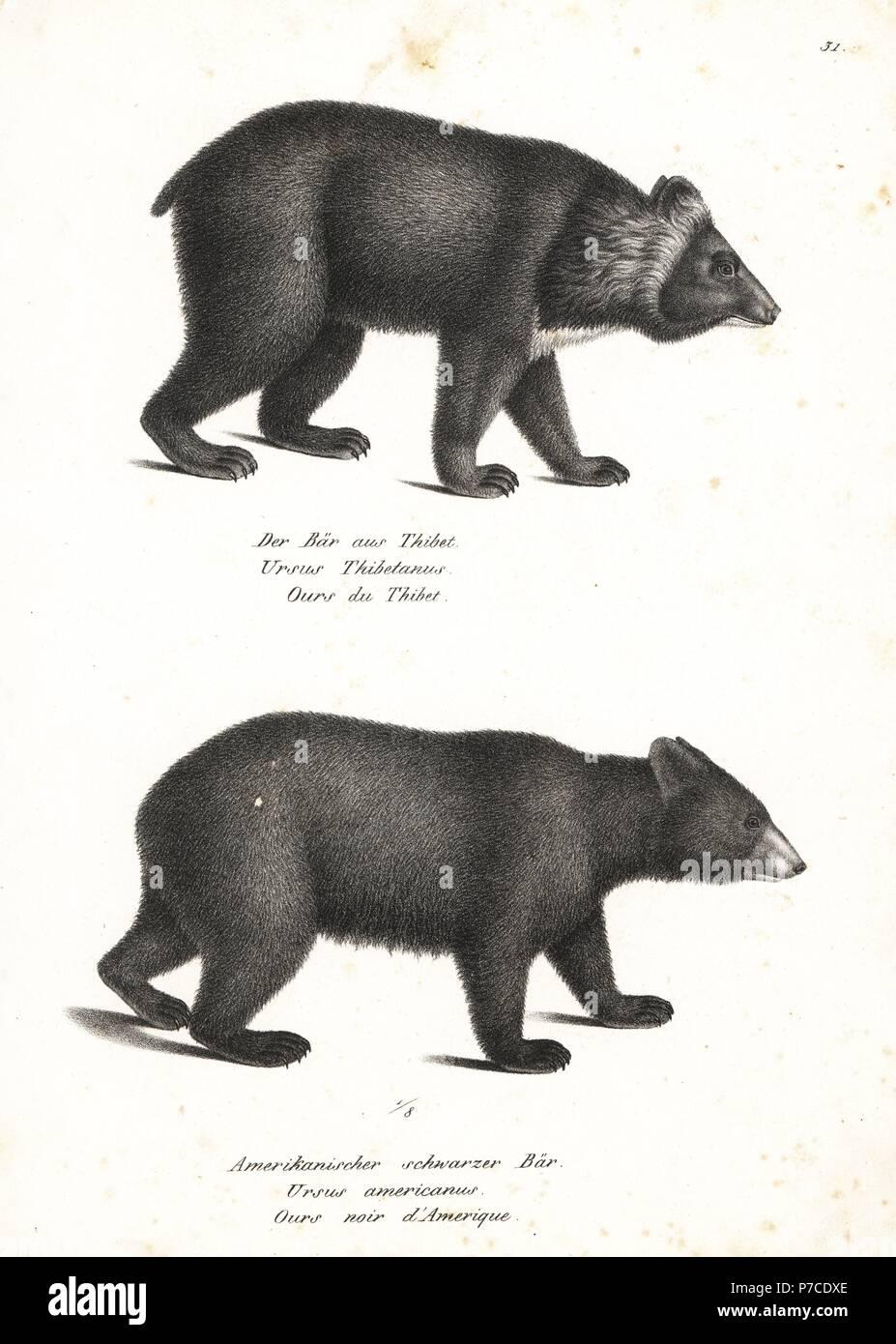 Fantastisch Anatomie Eines Schwarzen Bären Bilder - Anatomie Von ...