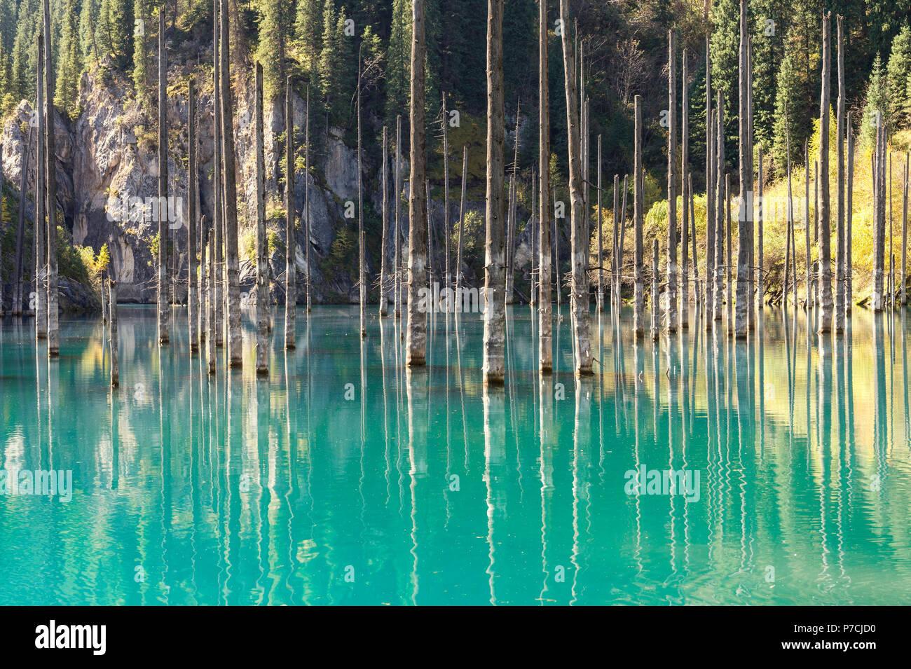 Dried trunks of Picea schrenkiana, Kaindy lake, Birch Tree Lake or Submerged Forest, Tien Shan Mountains, Kazakhstan - Stock Image
