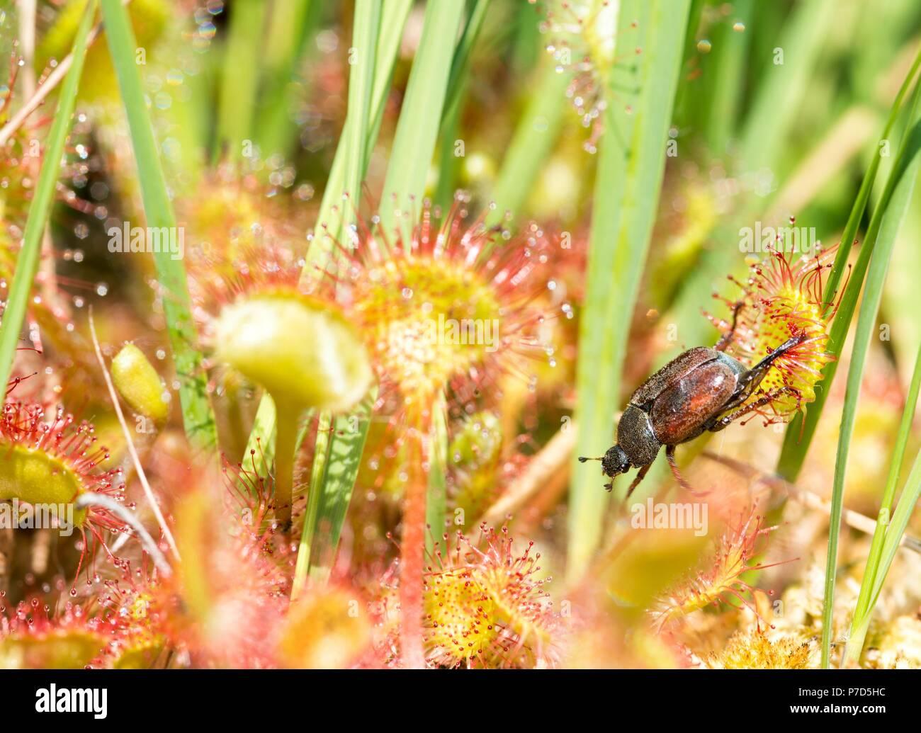 Tropical Island Beach Ambience Sound: Captured Beetle Stock Photos & Captured Beetle Stock