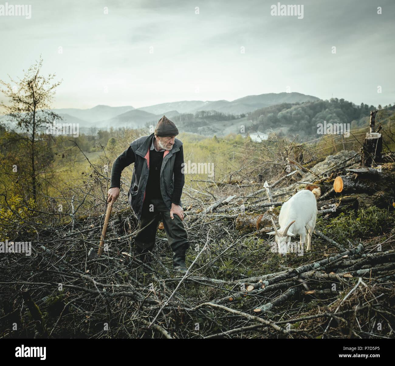 Shepherd with goat in Arasadzikh, he collects firewood, Arasadzikh, Abkhazia, Georgia - Stock Image