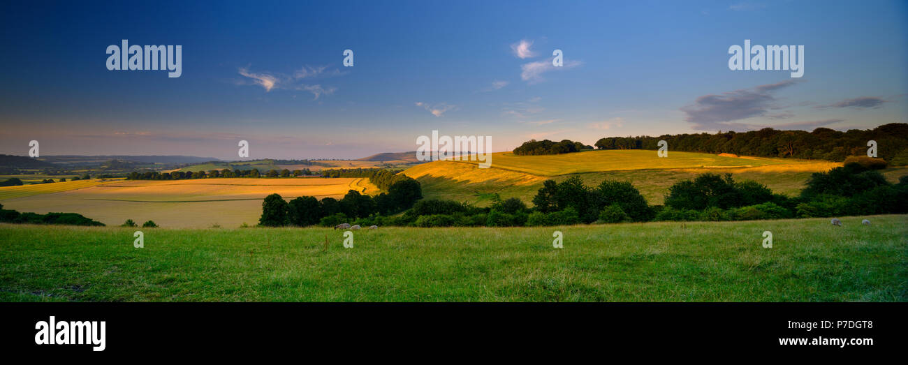 Summer sunset over the South Downs - high resolution stitched panorama of golden hour light falling on Butser Hill from above East Meon, Hamshire. UK Stock Photo