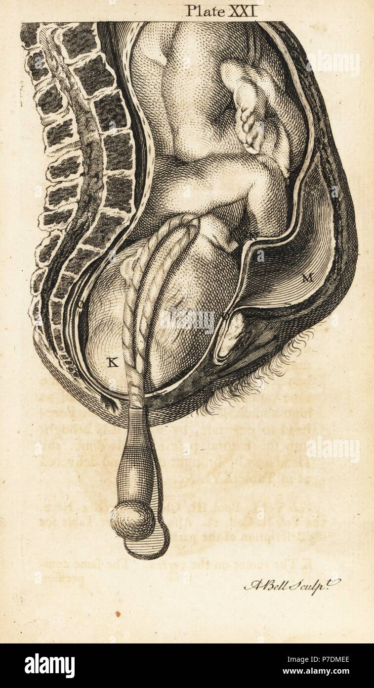 Exelent Birth Canal Anatomy Ensign - Physiology Of Human Body Images ...