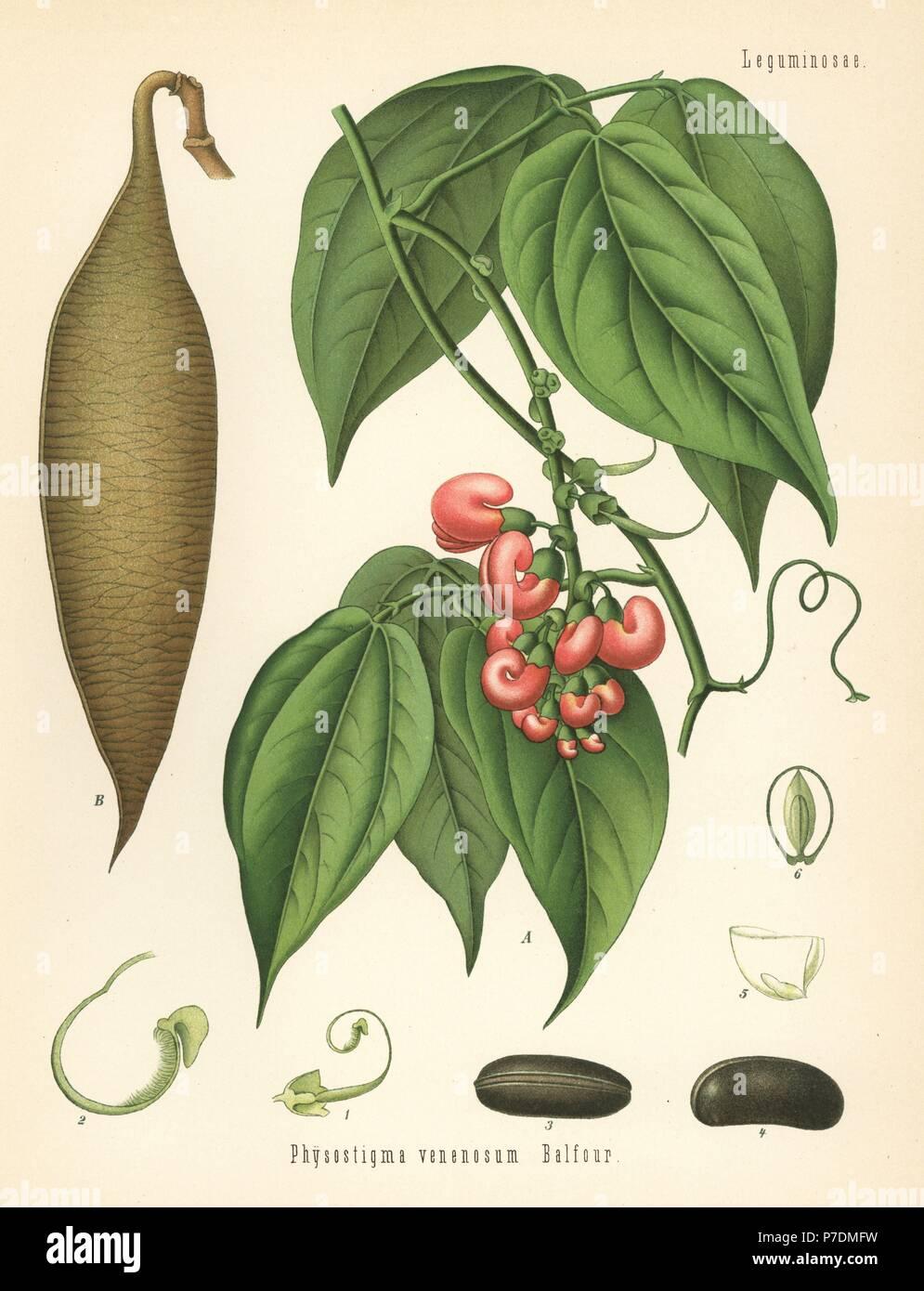 Physostigma venenosum $15 christmas gift ideas