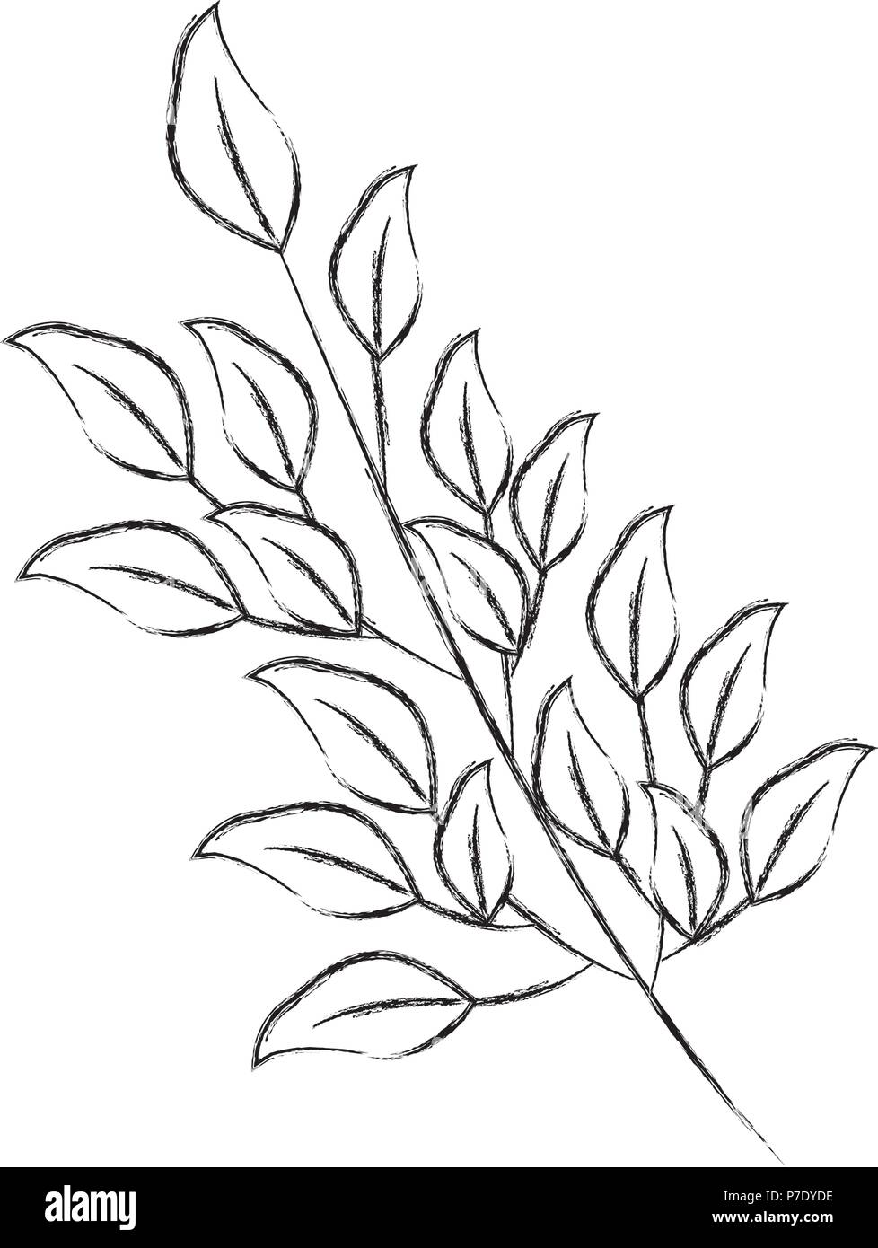 branch foliage leaves natural botanical vector illustration vector illustration sketch - Stock Image