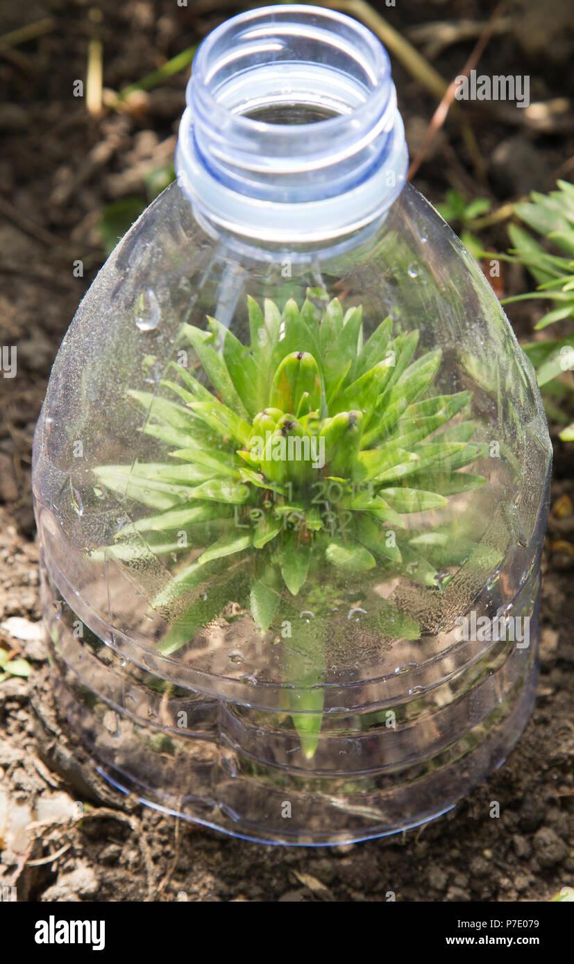 Plastic Bottle Greenhouse Stock Photos Amp Plastic Bottle