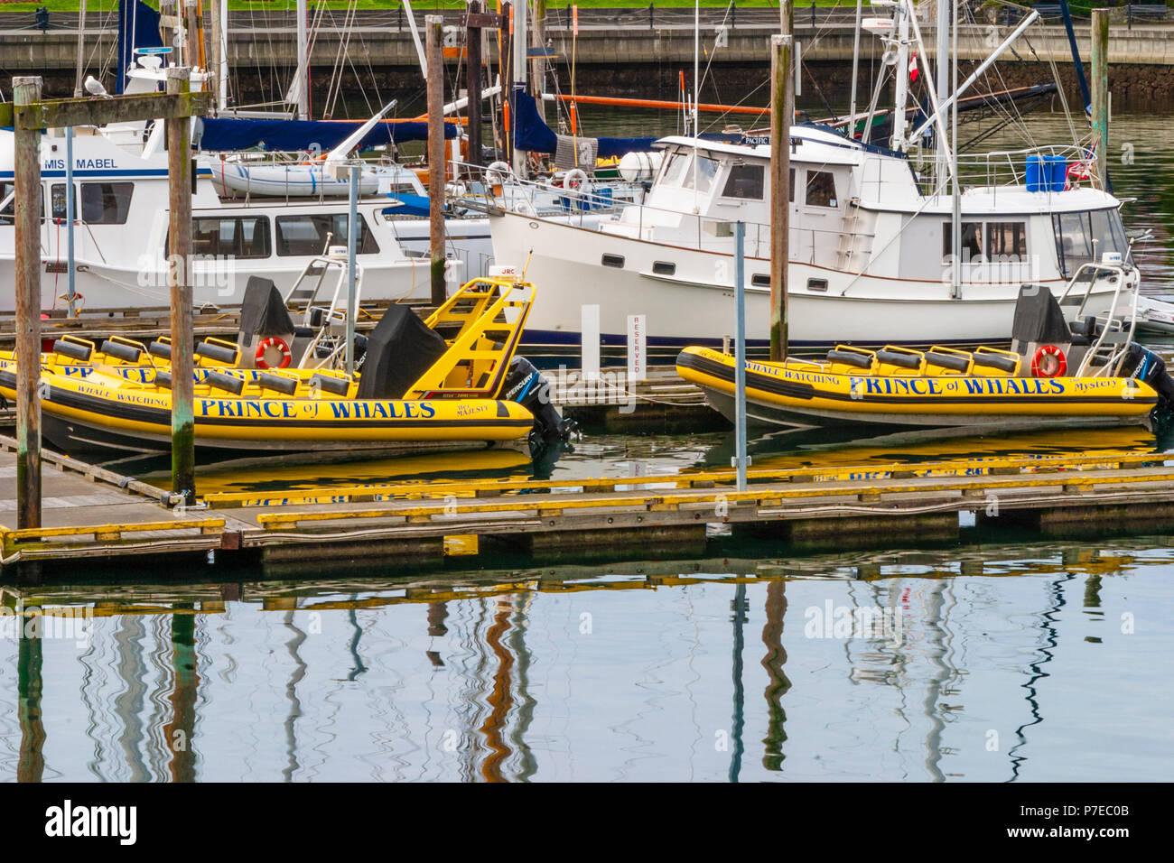 Tour boats at Victoria Harbour in Victoria, British Columbia, Canada. - Stock Image