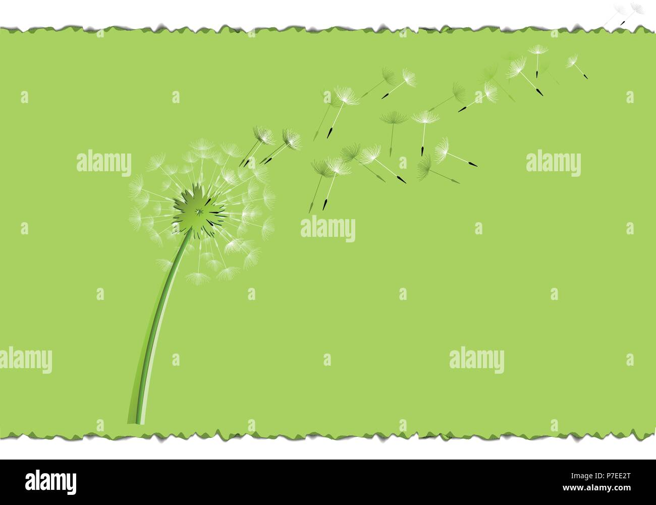flying dandelion seeds on a green leaf over a white background - Stock Vector