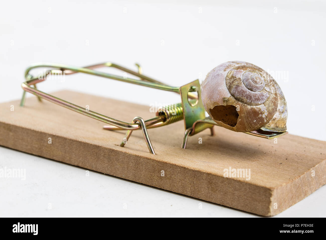 Mousetrap and empty damaged snail shell. The developer's trap is figuratively. White background. - Stock Image