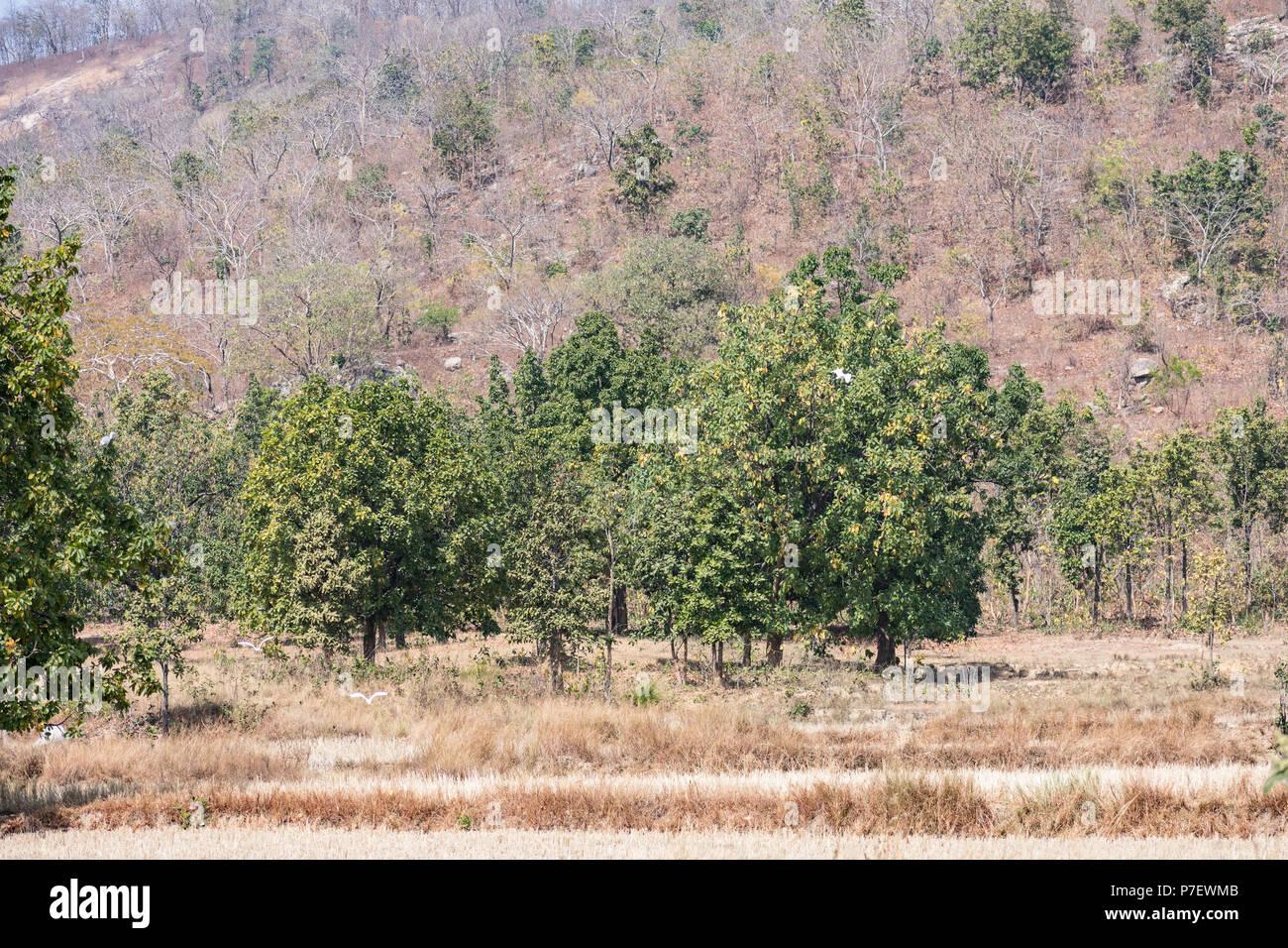 Harvesting Trees Stock Photos Amp Harvesting Trees Stock